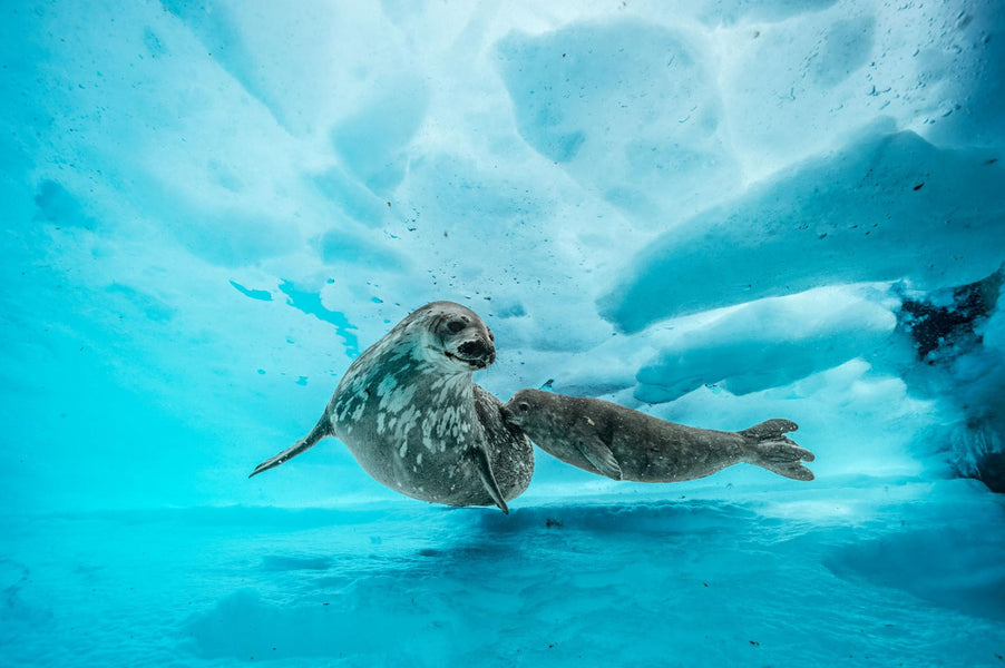 Stunning Underwater Images from Antartica's Depths