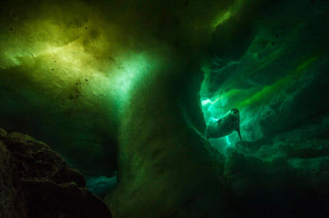Under Antarctica Photo for National Geographic by Laurent Ballesta