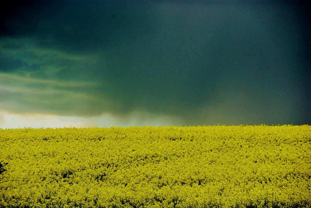 Storm Clouds Over Rape Fields by Barbara Parkins