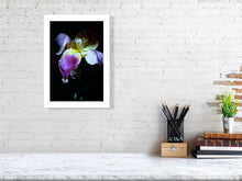Iris in Bloom by Barbara Parkins