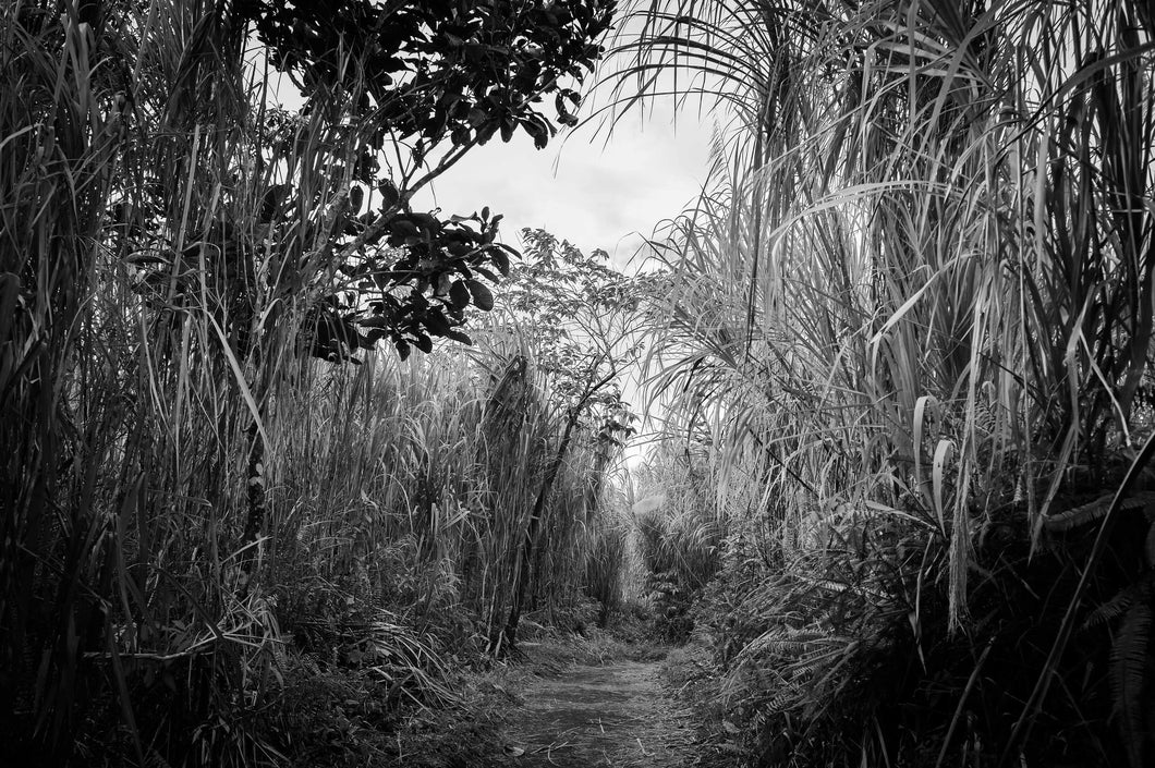 Photograph: The Jungle, Costa Rica, Print.