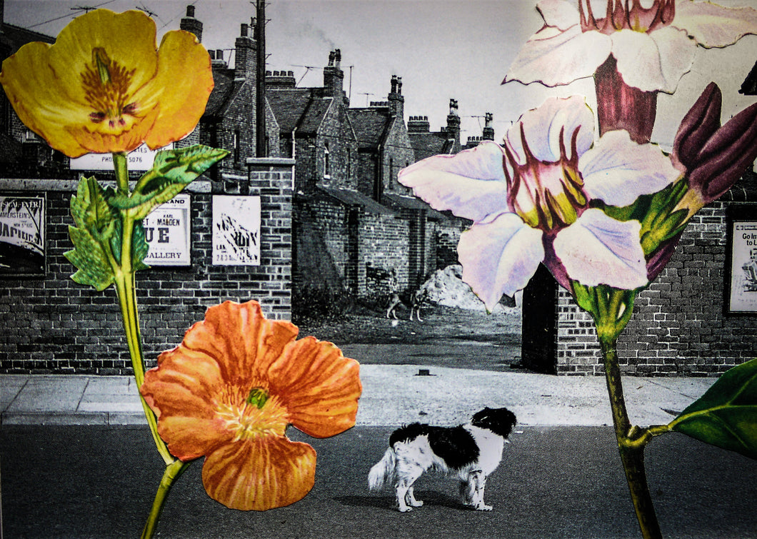 Photo Collage: Stand Off Under The Flowers by Toni Peach at 100Prints.co.uk