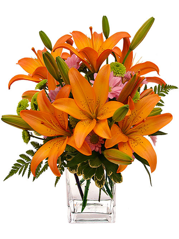 Orange Lily And Daisy Arrangement Next Day Flower Delivery