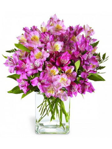 Peruvian Lilies (Vase Included)