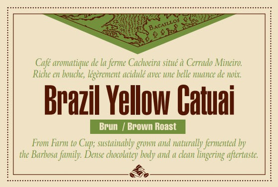 Brazil Yellow Catuai