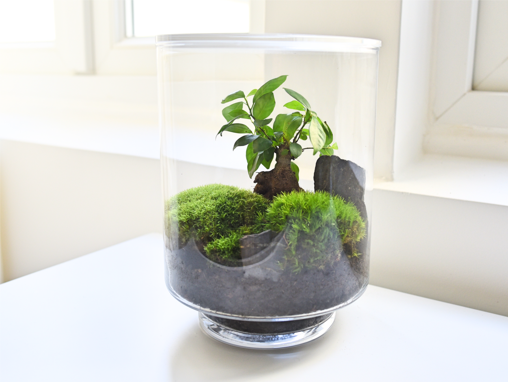 terrarium kit green design yamayama