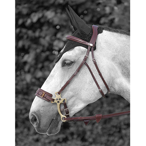 Hackamore bridle by Dy'on