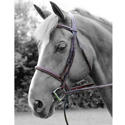 Cavesson Noseband Bridle by Dy'on