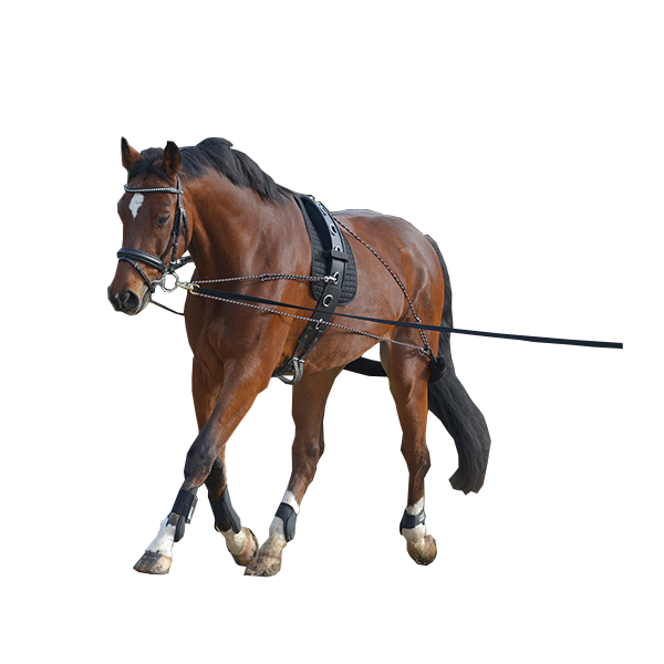 Lunging System by Waldhausen
