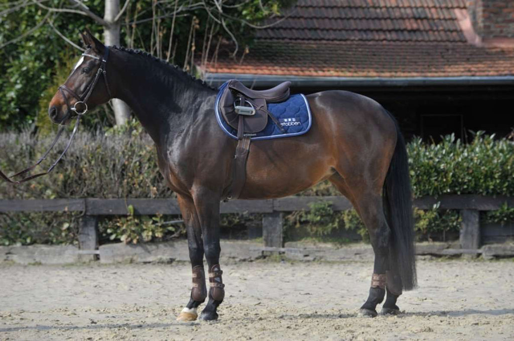 Stubben Jumping Saddle Portos