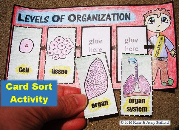Levels of Organization Activities