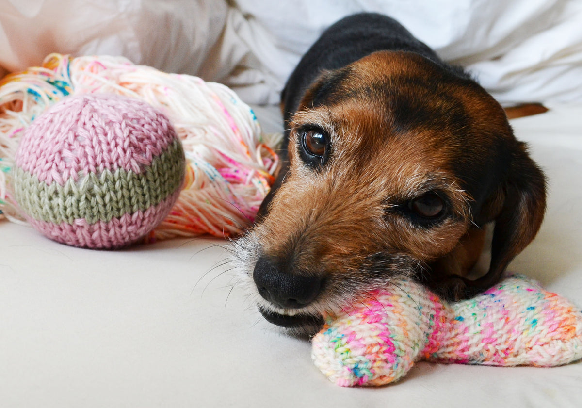 JOIN KNIT FOR PETS CHALLENGE!