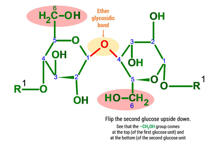 cellulose molecule
