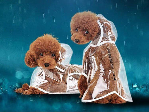 Adorable Transparent Dog Raincoat Smart Dog HOOPET