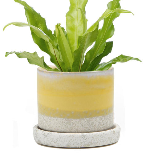 Ceramic Pot with Drainage - Yellow
