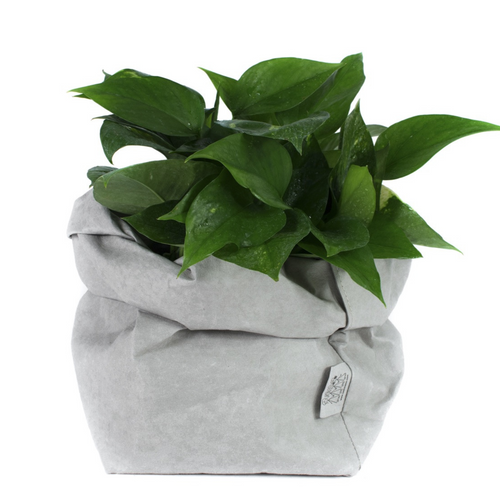 Light Grey Uashmama Paper Bag (Multiple Sizes)