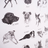 100 Dogs Poster