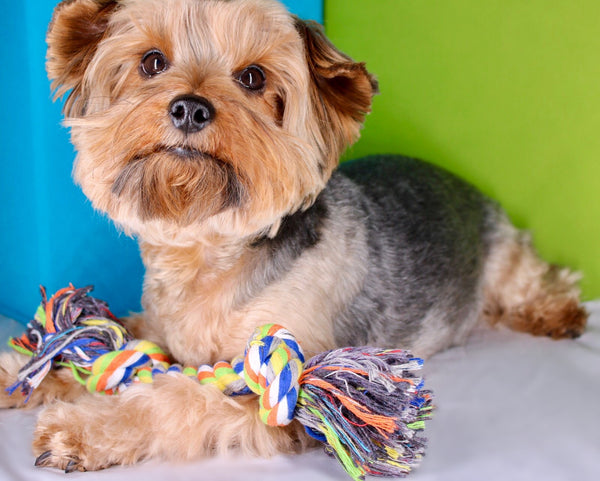 Dog with multi-color rope toy