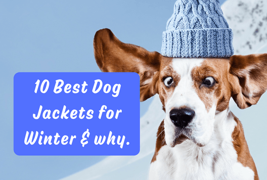 10 Best Dog Jackets for Winter and why.