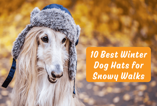 10 Best Winter Dog Hats for Snowy Walks