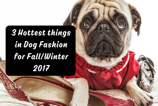 3 Hottest Things in Dog Fashion for Fall/Winter 2017