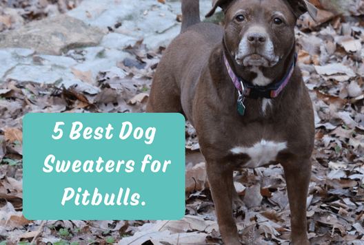5 Best Dog Sweaters for Pitbulls