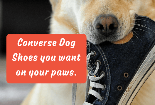 Converse Dog Shoes you want on your paws. ???Furbabeez