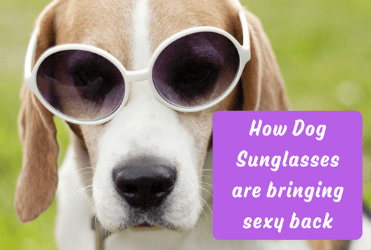 How Dog Sunglasses are Bringing Sexy Back