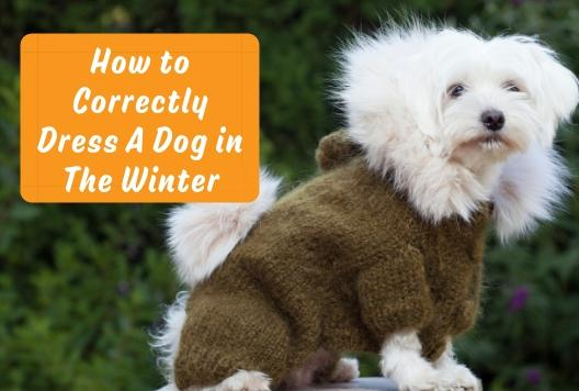 How to Correctly Dress A Dog in The Winter
