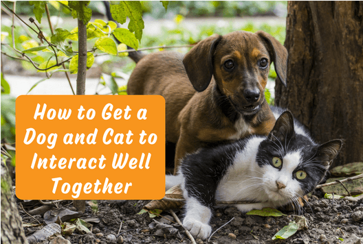 How to Get a Dog and Cat to Interact Well Together