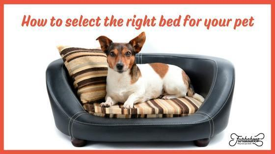 How to select the right bed for your pet.