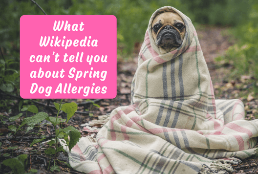 What Wikipedia can't tell you about Spring Dog Allergies