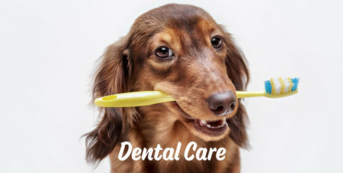 dental-care-for-pets