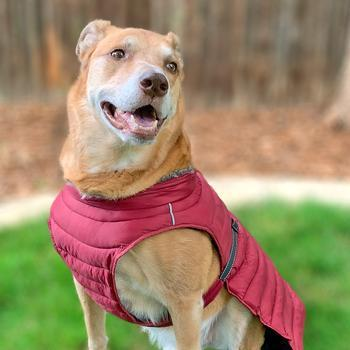 Alpine Extreme Weather Puffer Dog Coat - Burgundy Pet Clothes Doggie Design