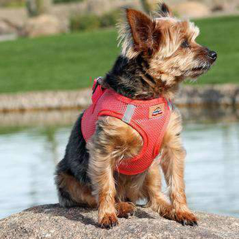 American River Ultra Choke-Free Mesh Dog Harness - Coral, Collars and Leads, Furbabeez, [tag]