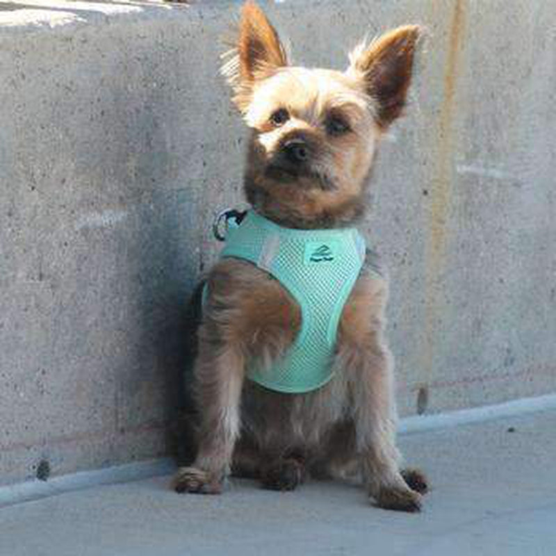 American River Ultra Choke-Free Mesh Dog Harness - Teal, Collars and Leads, Furbabeez, [tag]