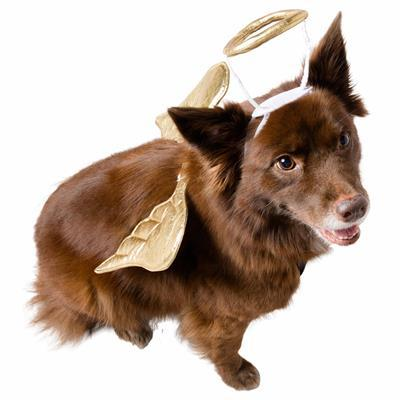 Angel Dog Pet Costume Pet Clothes Pet Krewe