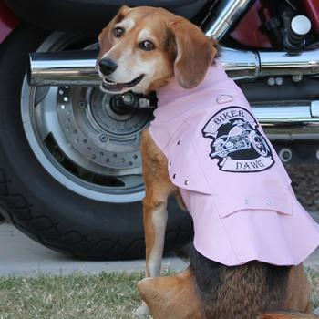 Biker Dawg Motorcycle Dog Jacket - Pink Pet Clothes Doggie Design