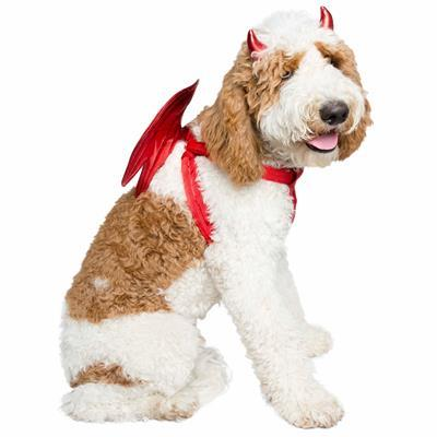 Devil Dog Pet Costume Pet Clothes Pet Krewe