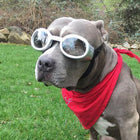 Doggles - ILS2 Silver Frame with Clear Lens, Pet Accessories, Furbabeez, [tag]