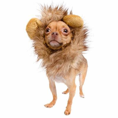 Lion Mane Costume for Small Dogs Pet Accessories Pet Krewe