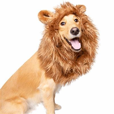 Lion Mane Costume with ears for Medium and Big Dogs Pet Accessories Pet Krewe M/L