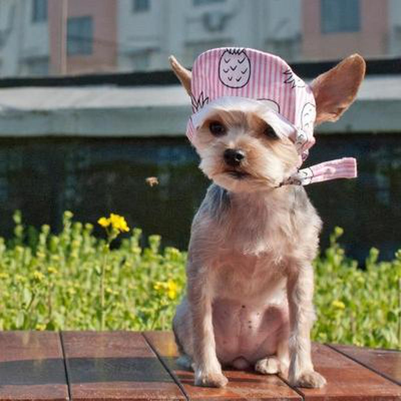 Pink Pineapple Dog Hat Pet Accessories DOGO