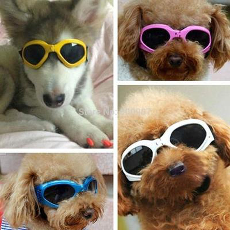 Doggles Protection Dog Eyewear, Pet Accessories, Furbabeez, [tag]