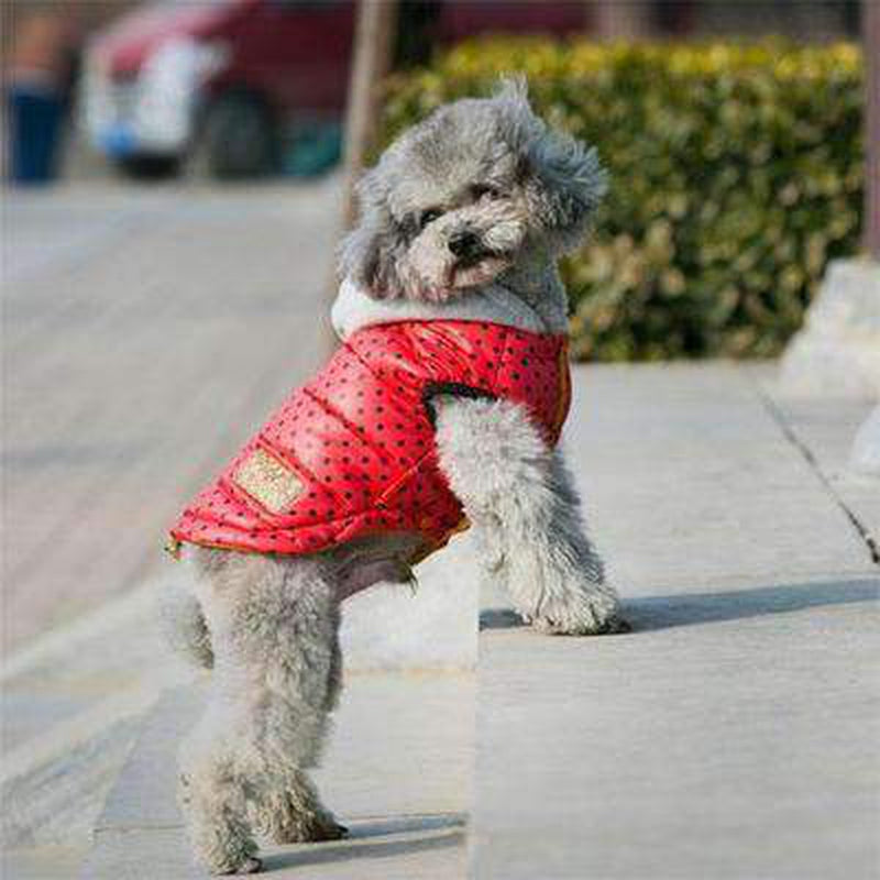Polka Dot Warm Down Hoodie Pet Clothes Oberlo Red L