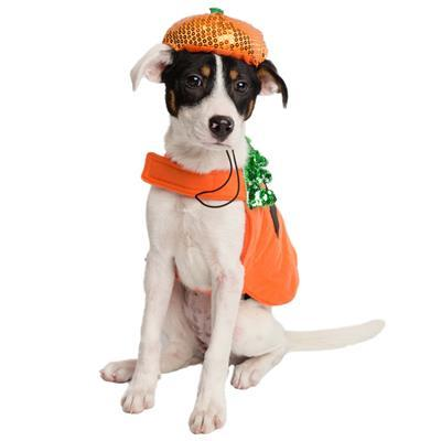 Pumpkin Dog Costume and Hat Pet Clothes Pet Krewe