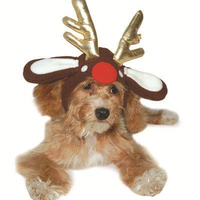 Rudolph Reindeer Dog Hat Pet Accessories DOGO