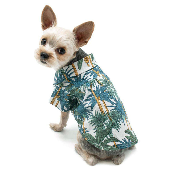 Tropical Leaf Dog Shirt, Pet Clothes, Furbabeez, [tag]