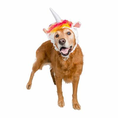 Unicorn Dog Hat Costume Pet Accessories Pet Krewe Large