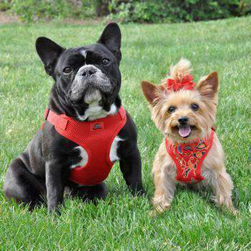 Wrap and Snap Choke Free Dog Harness - Flame Red, Collars and Leads, Furbabeez, [tag]